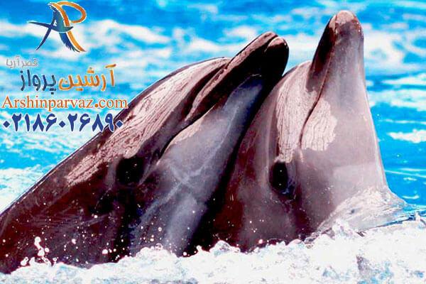 تور کیش پارک دلفین ها